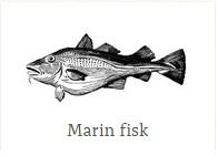 marinfisk